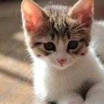 猫_フクマネ不動産