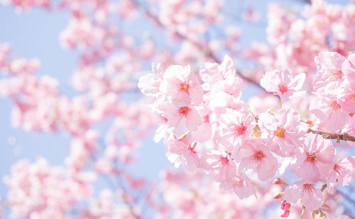 浪速区のお花見スポット・桜